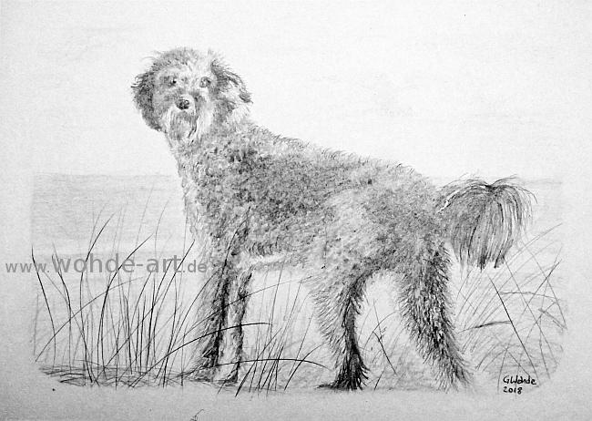 Portrait Hund Doodle Bleistiftzeichnung