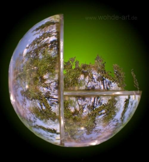 Bäume in zwei gläsernen Halbkugeln