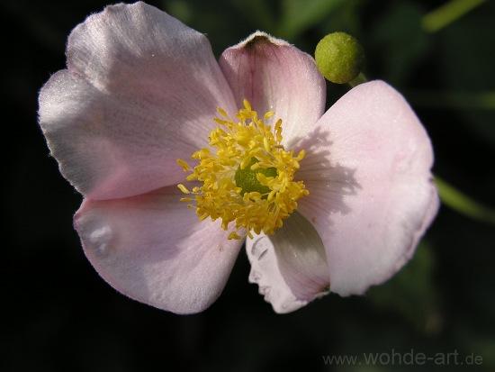 Blüte mit Gesicht