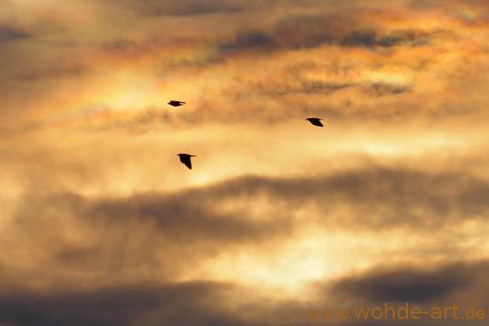 Wolkiger Abendhimmel mit Vögel