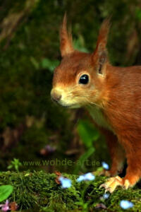Portraitaufnahme eines Eichhörnchens