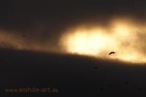 Wolkiger Abendhimmel mit Vogel